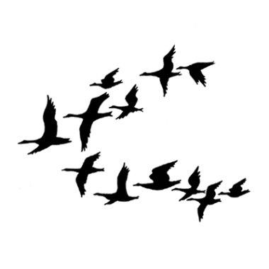 Stempel LAV247 Ducks