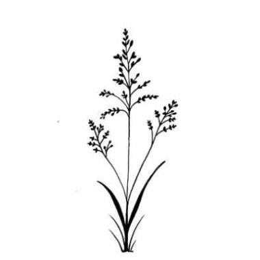 Stempel LAV197 Field grass