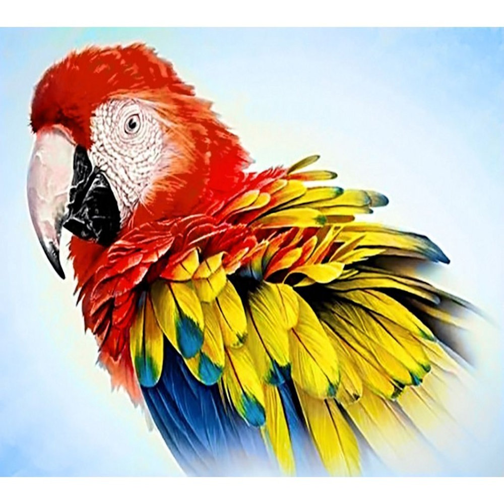 Papegøje 27x38 cm