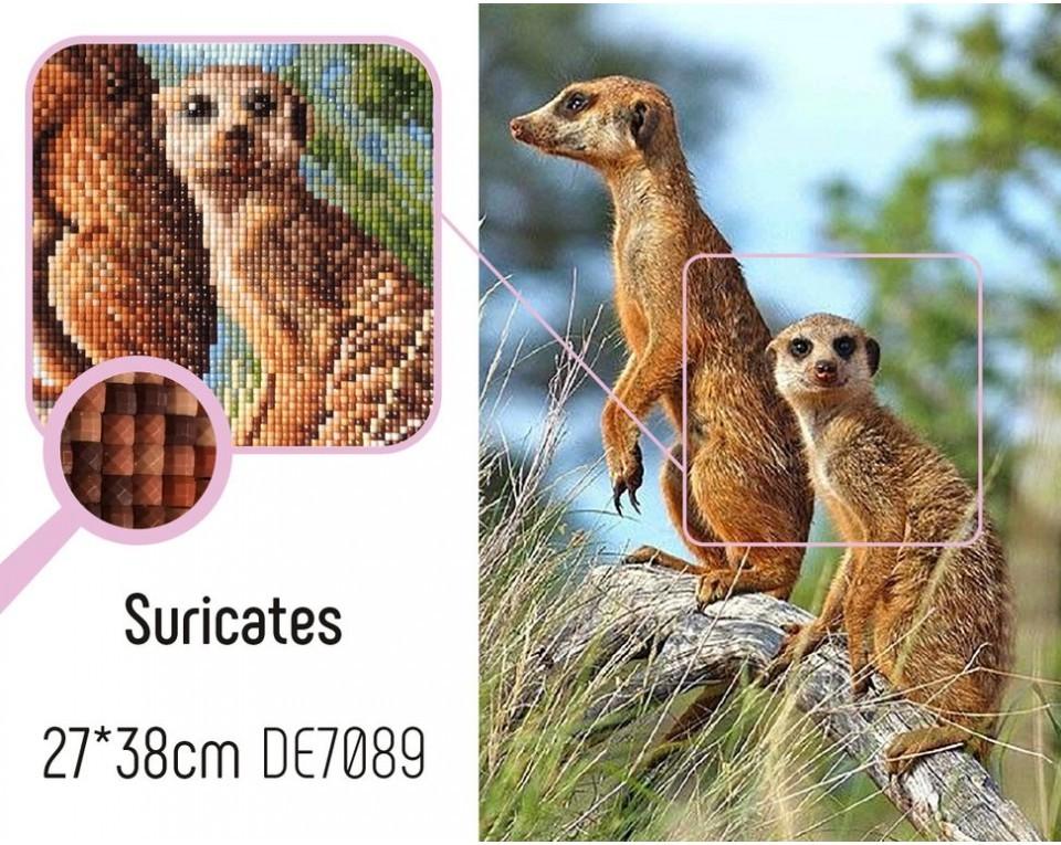 Suricates 27x38 cm