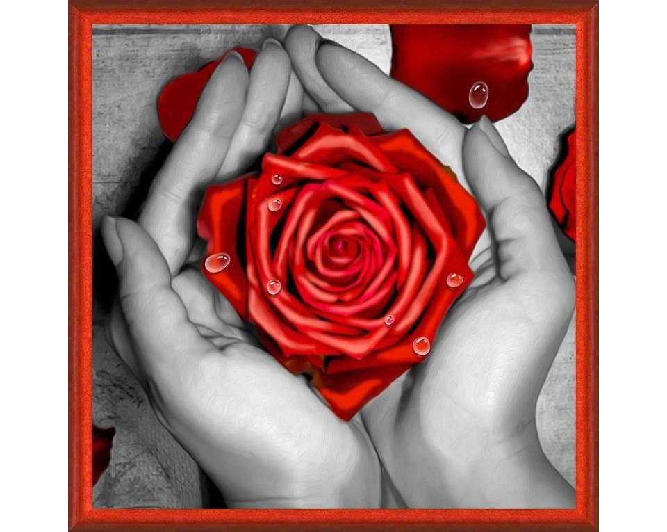 Rød rose i hånden 25x25