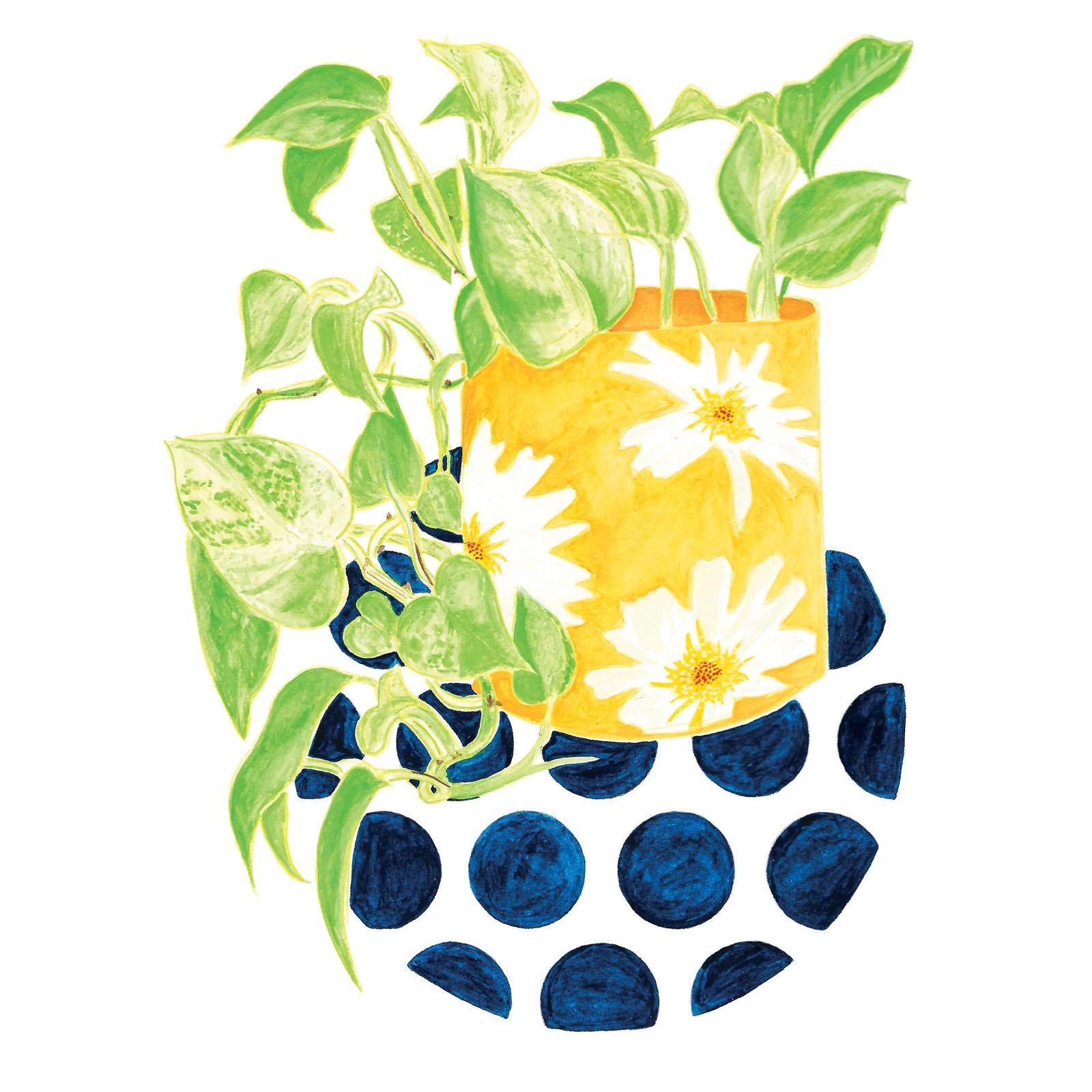 Bungaloworld - Egg Yolk Daisy