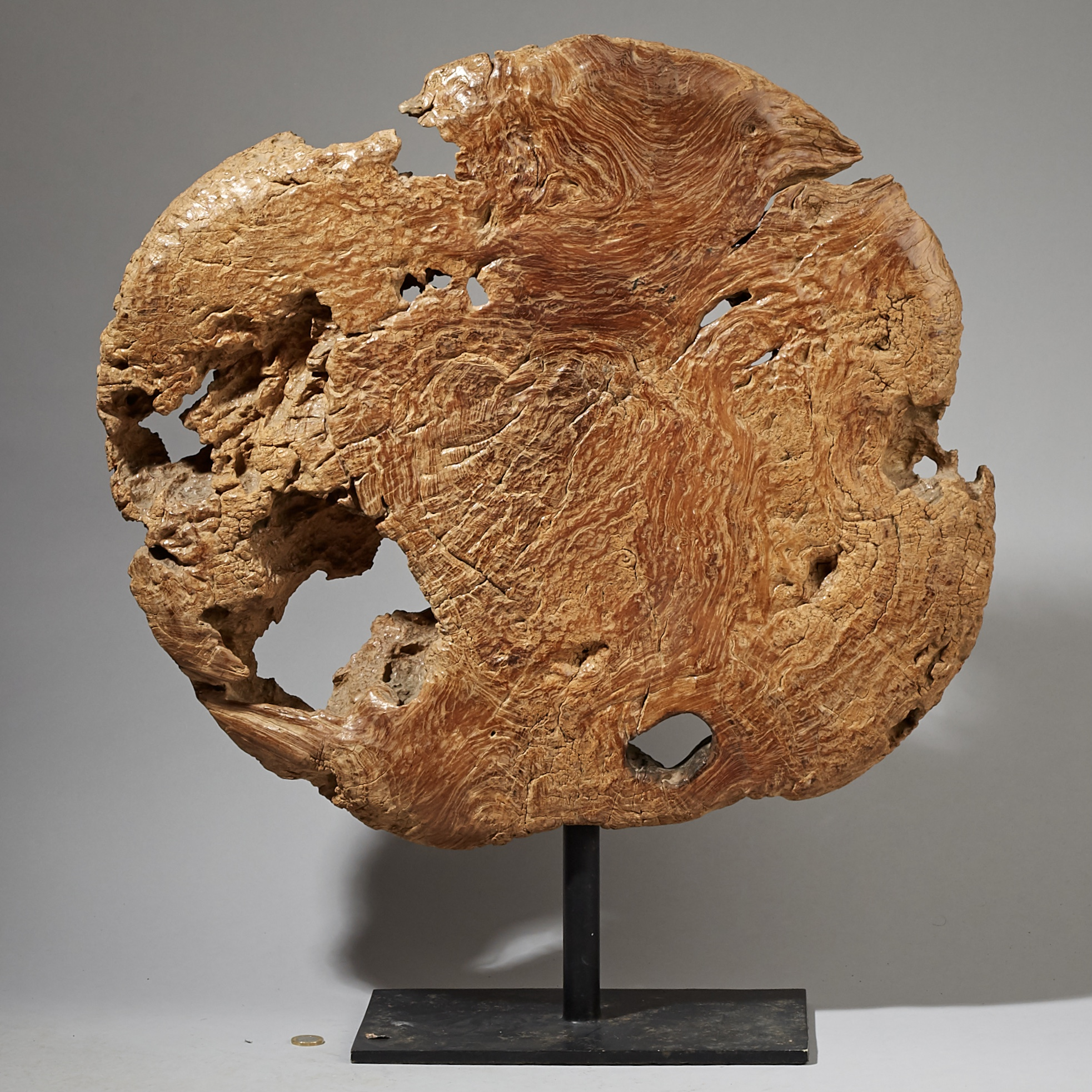 AN EXQUISITELY PATINATED HUGE COG  FROM INDONESIA ( No 3299 )