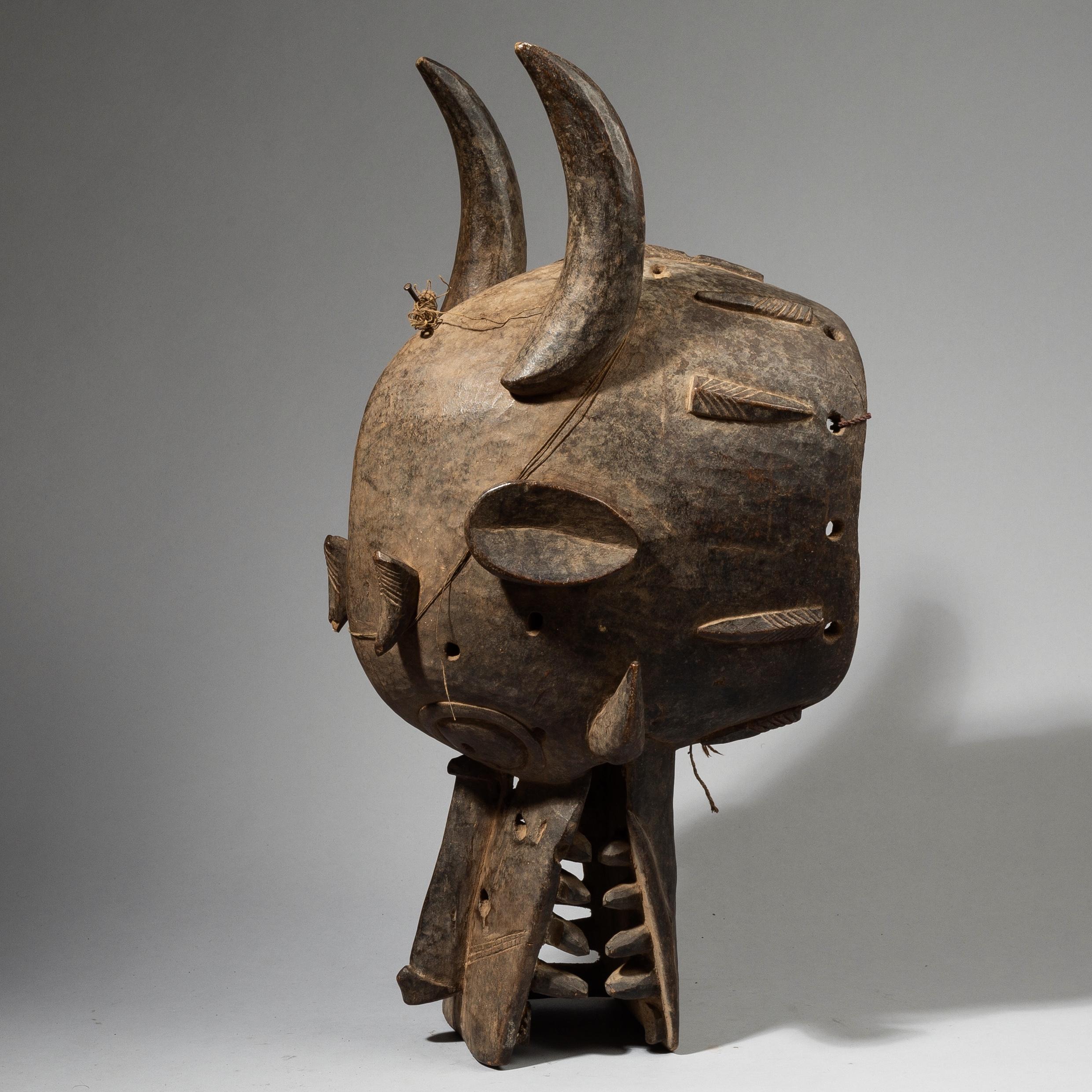 A GIANT SENOUFO FIRESPITTER MASK FROM BURKINA FASO W.AFRICA ( No 4434)