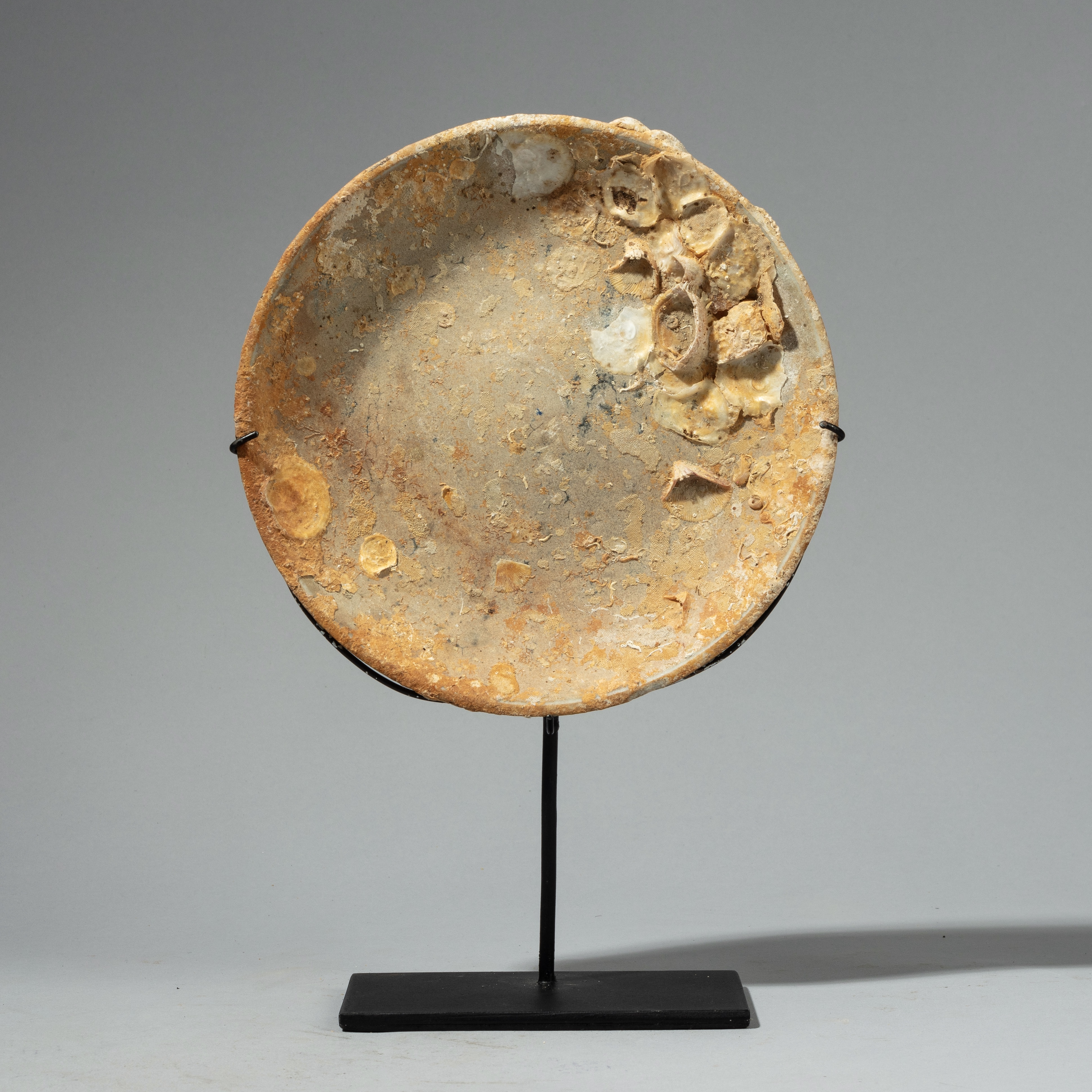 AN ENCRUSTED UNDERWATER POTTERY PLATE FROM INDONESIA ( No 4331)