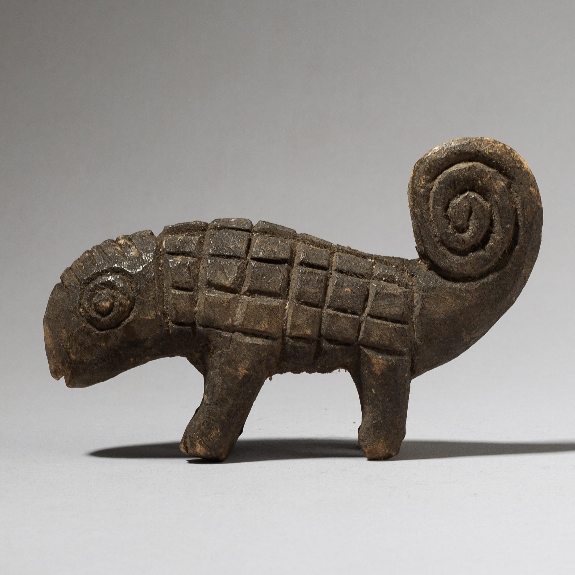 A PERKY LOBI CHAMELEON FROM BURKINA FASO ( No 4024)