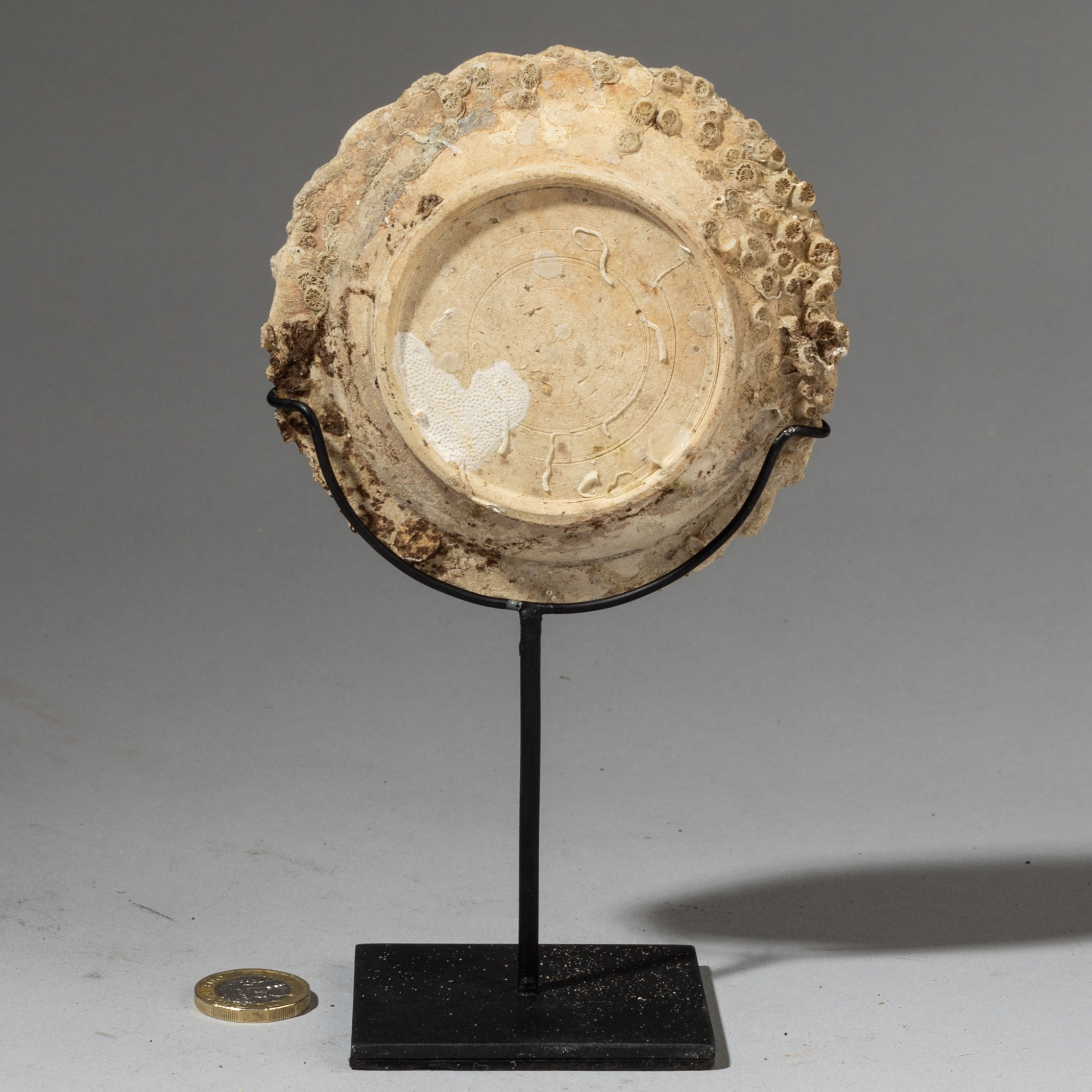 AN UNDERWATER POTTERY WITH BARNACLES FROM INDONESIA ( No 3300 )