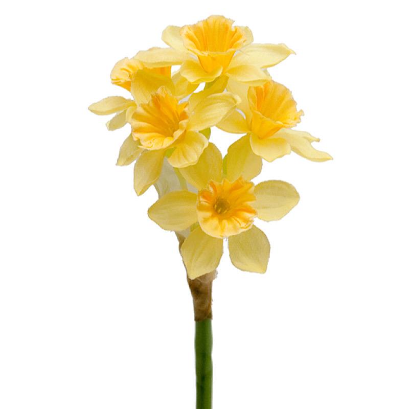 Påsklilja  25 cm