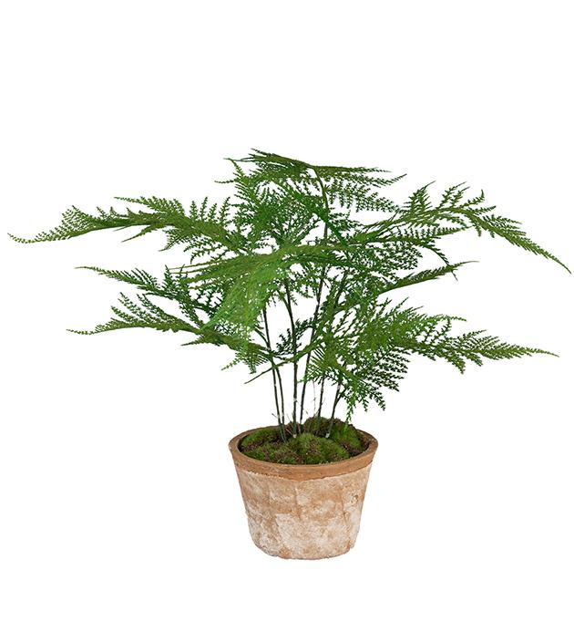 Plumpsus, grønn plante