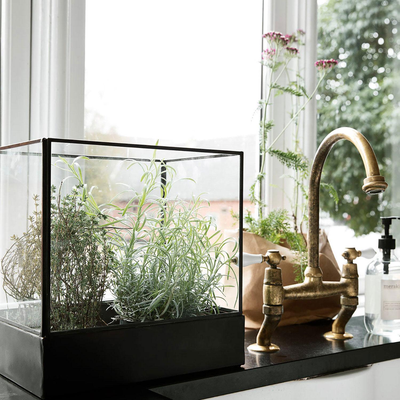 Plant, utstillingsmonter