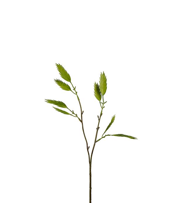 Kvist fra Mr.Plant