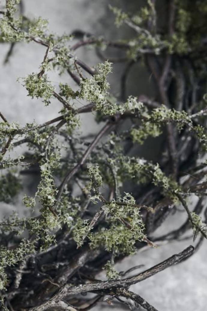 Krans «wild Moss»