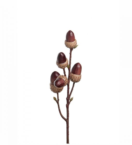 Kvist, nøtter fra Mr.Plant