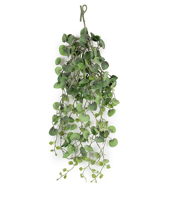 Sølvplett, grønn plante