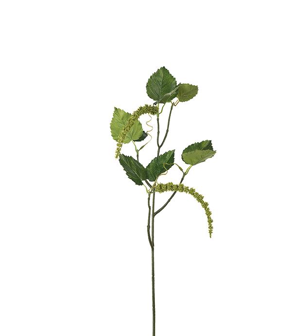 Grønn kvist fra Mr.Plant
