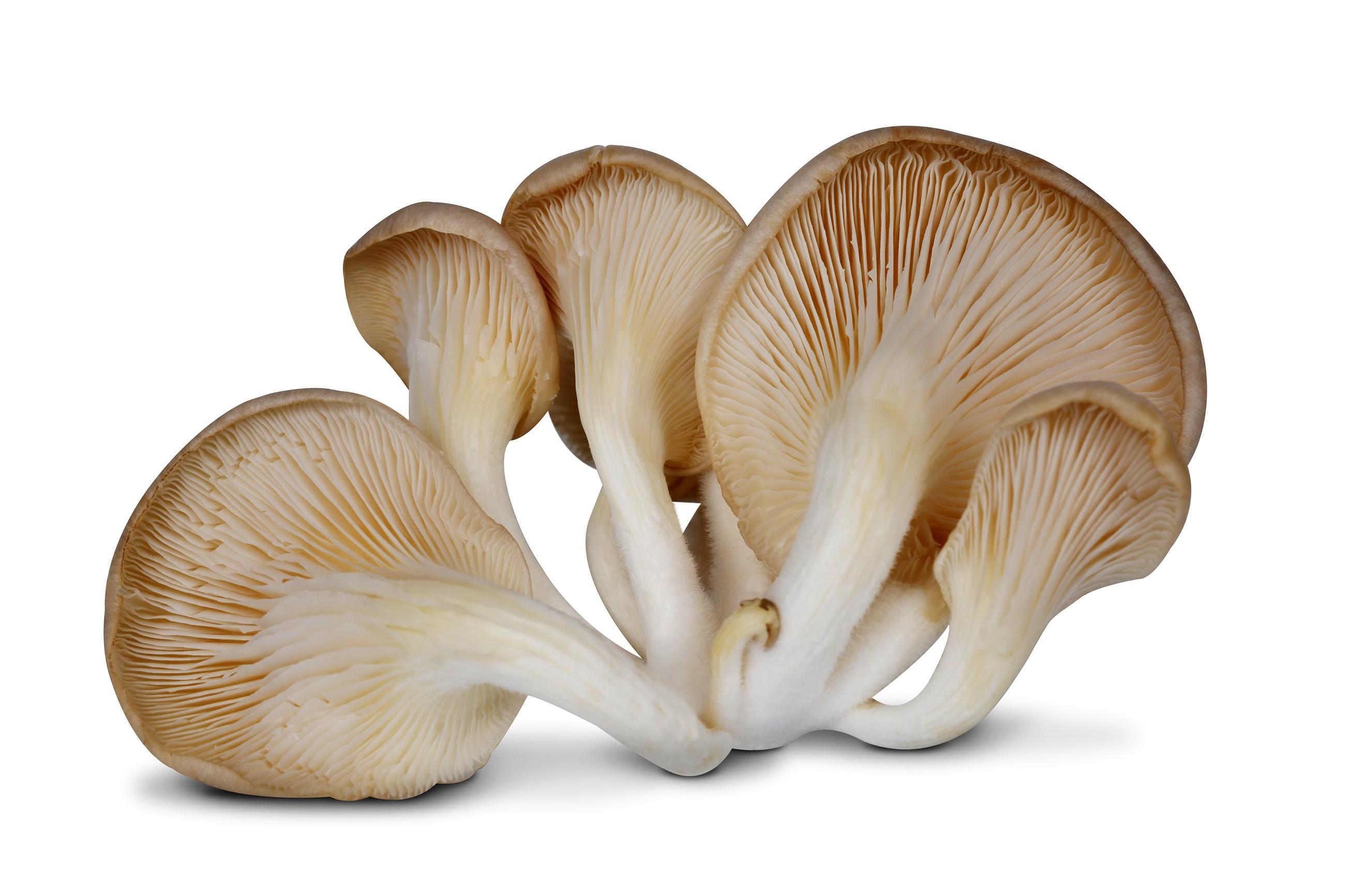 Oyster Mushroom (300g)