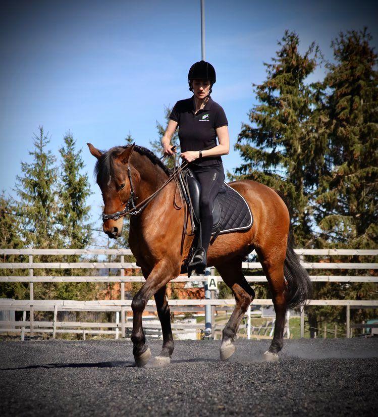 Working Equitation åpen trening