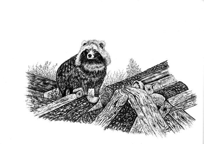 Original hunting images drawings