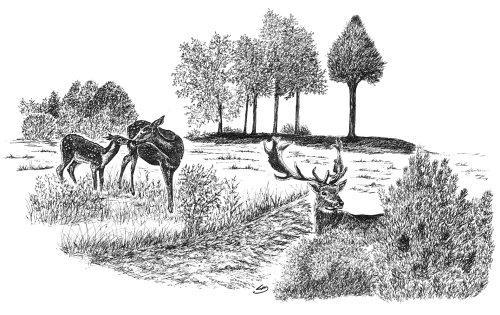 Original jagtmotiver tegninger, A3