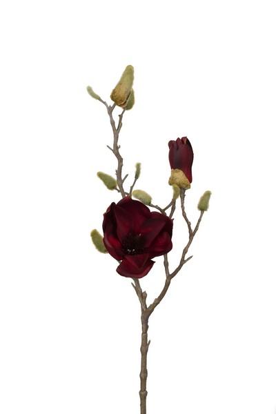 Silkeblomst Magnolie