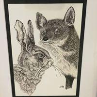 Haren og ræven tegning
