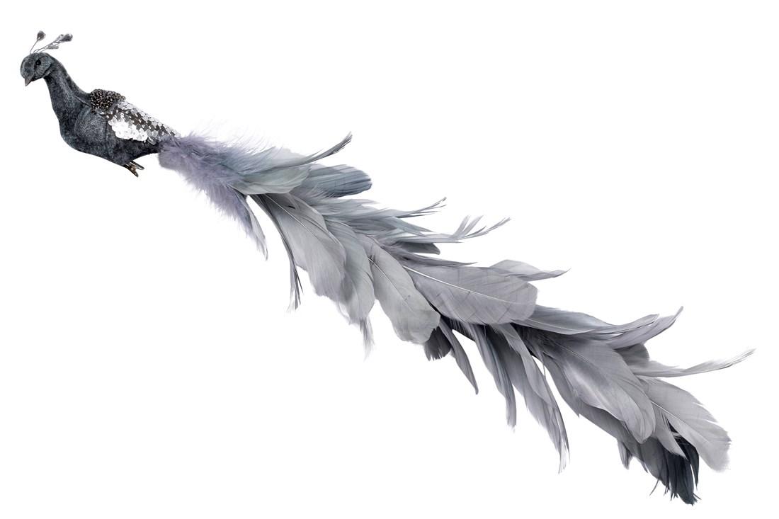 Fugl på clips