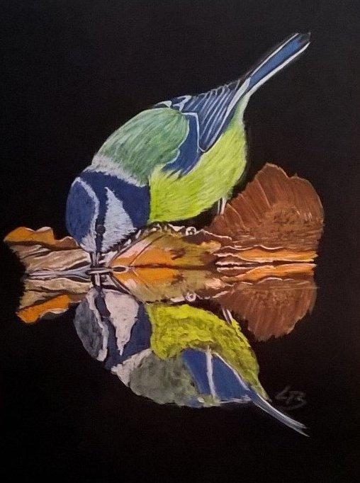 Akvarel blåmejse