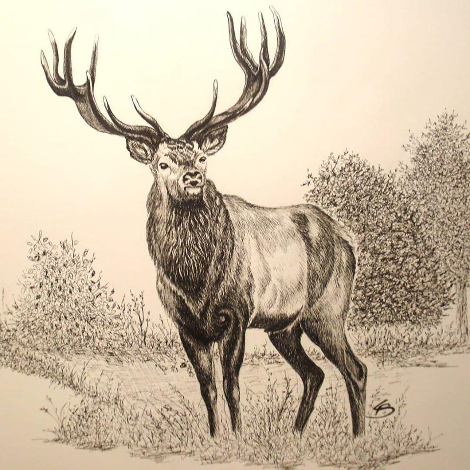 Kronhjort jagtmotiv