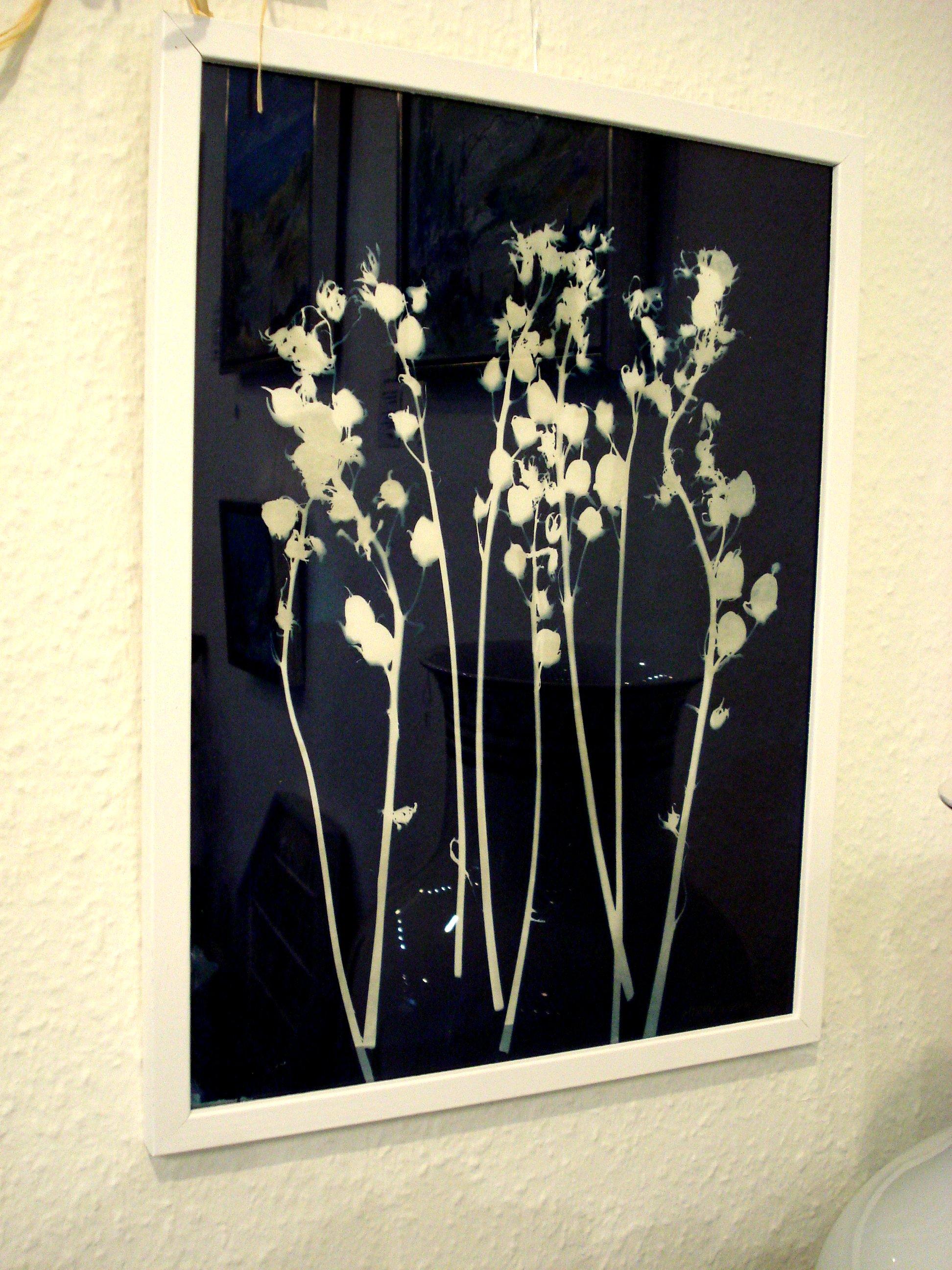 Cyanotopi blomster