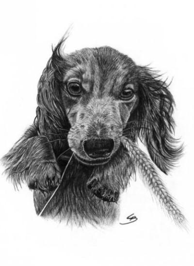 Håndtegnet original hundeportrætter