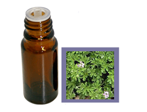 Organic Rose Geranium Essential Oil
