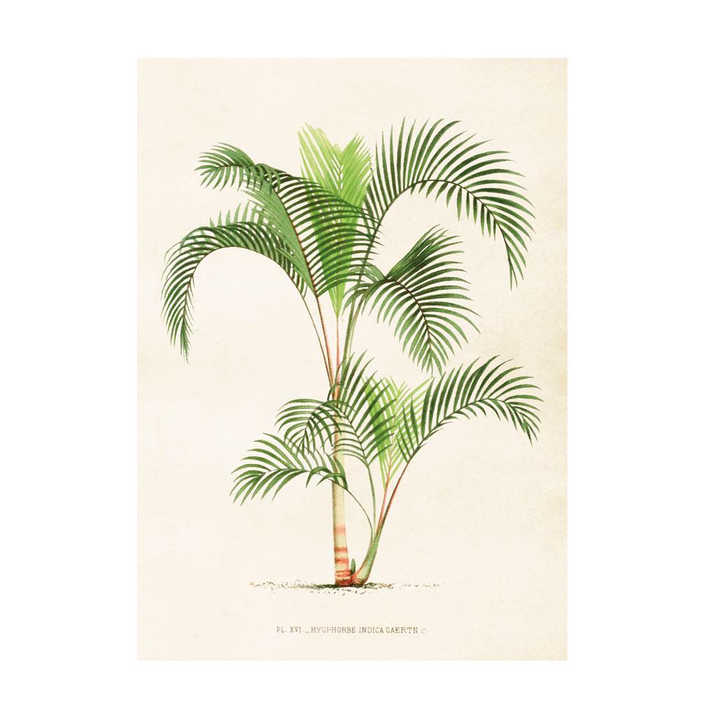 Plakat Palmetræ 50x70cm