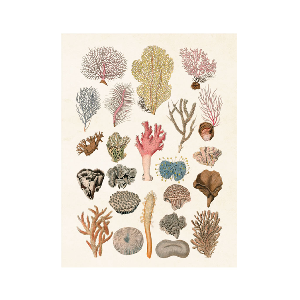 Plakat Koraller 18X24cm