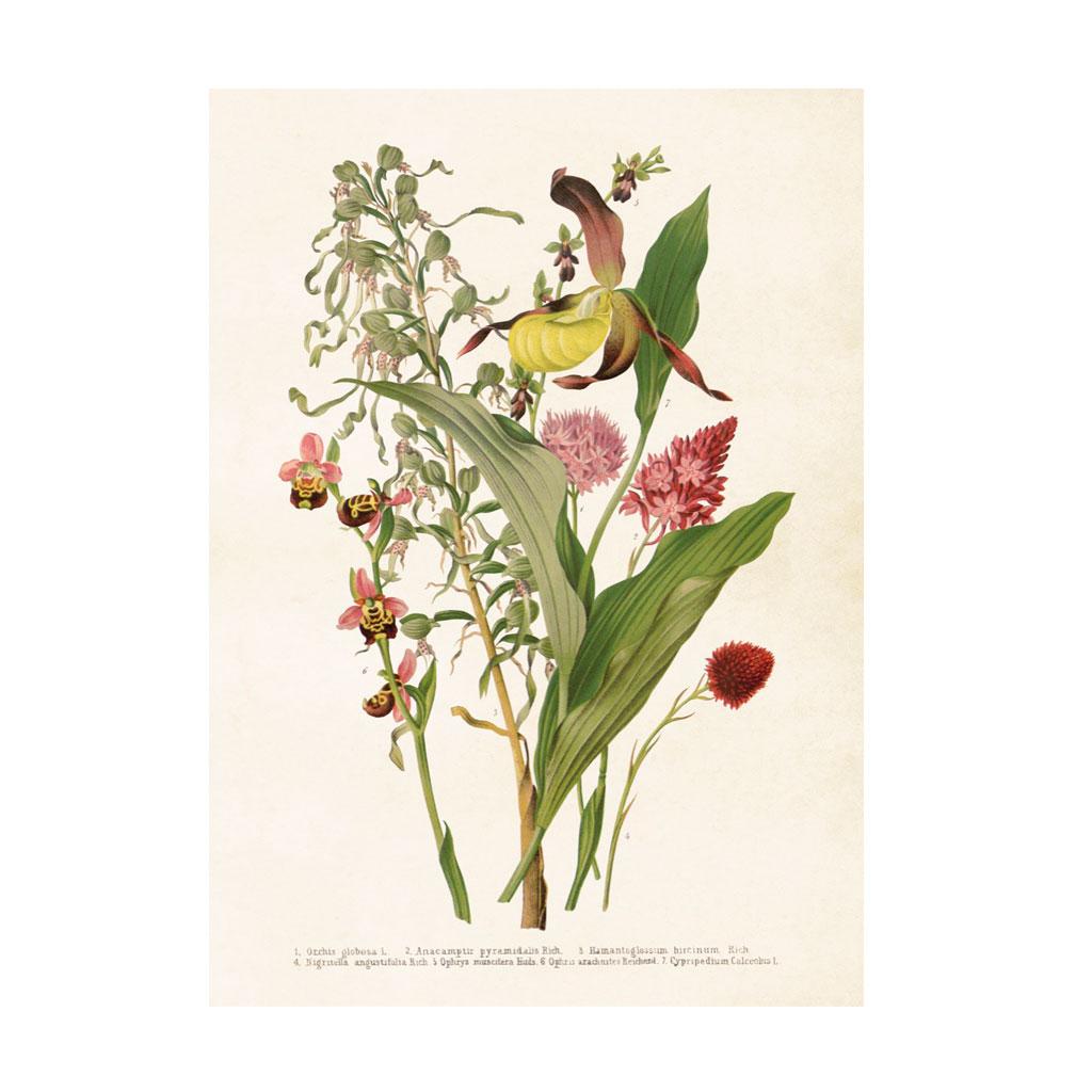 Plakat Blomsterbuket 50x70cm