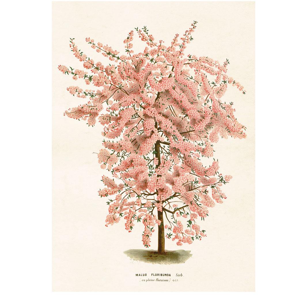 Plakat Blomstrende træ 70x100cm