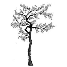 LAV015 Cherry Blossom Tree