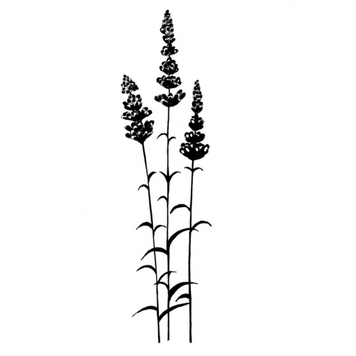 LAV093 Lavender