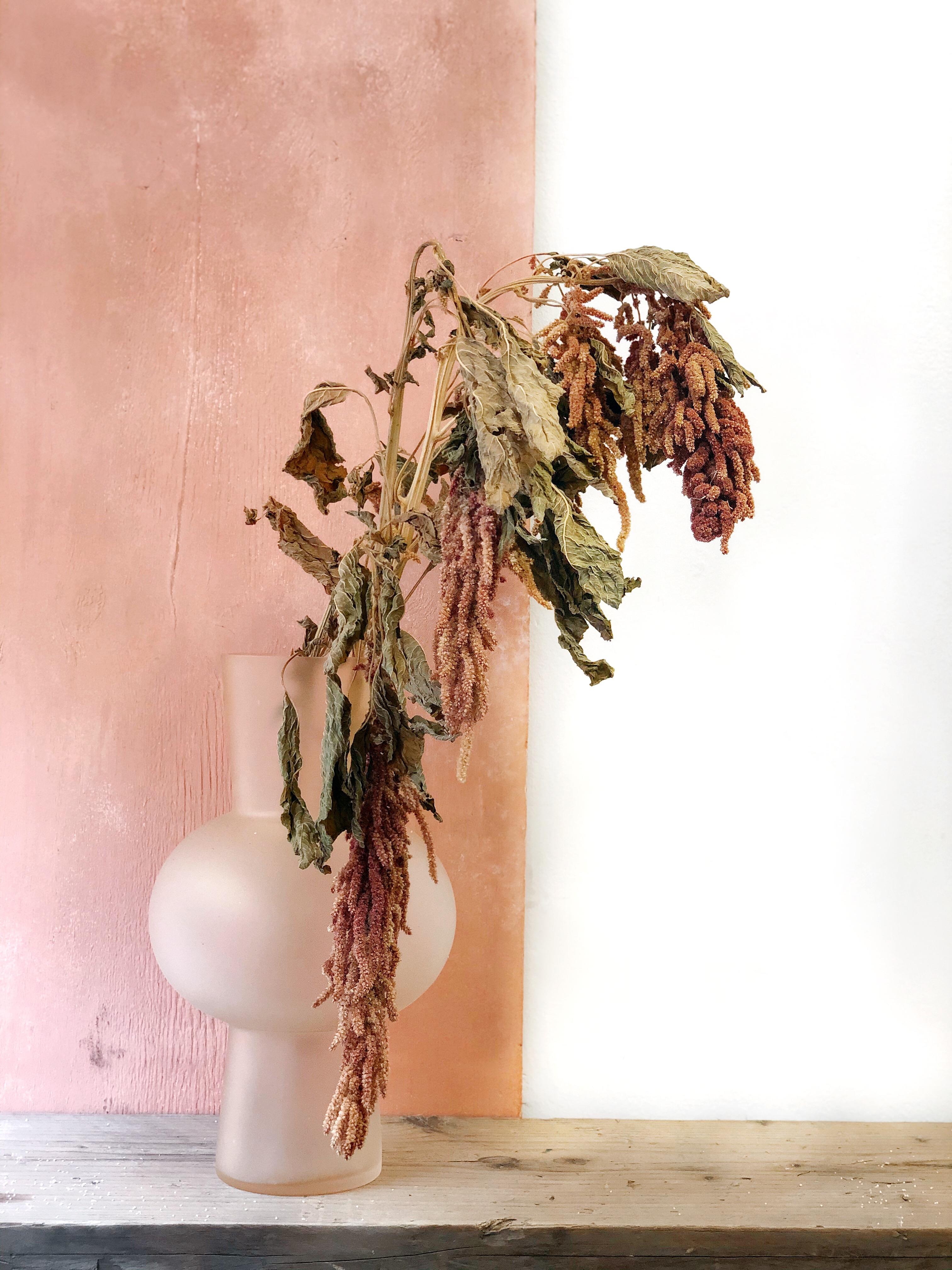 Amaranthus - natural pink