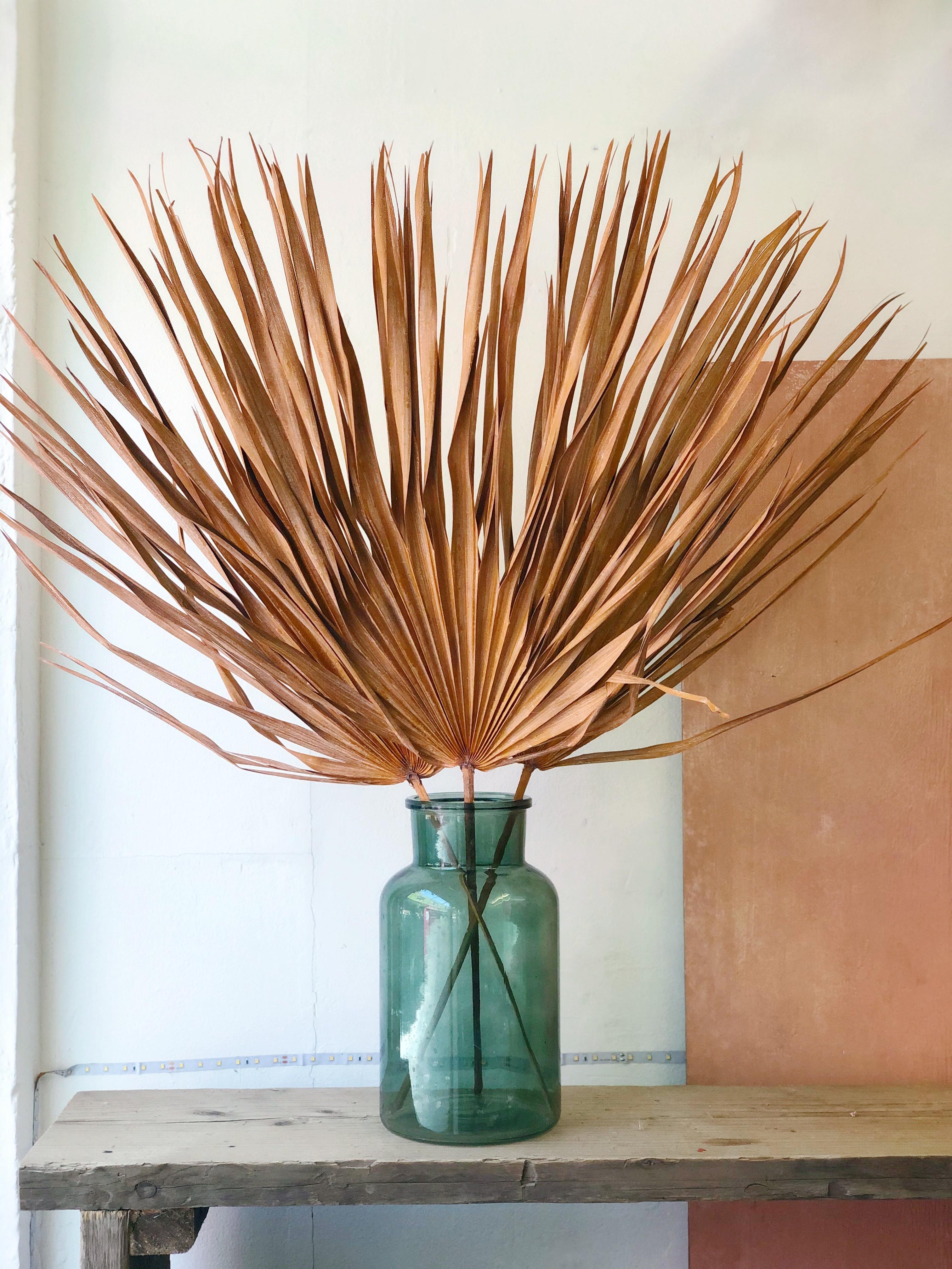 Peach palm leaves