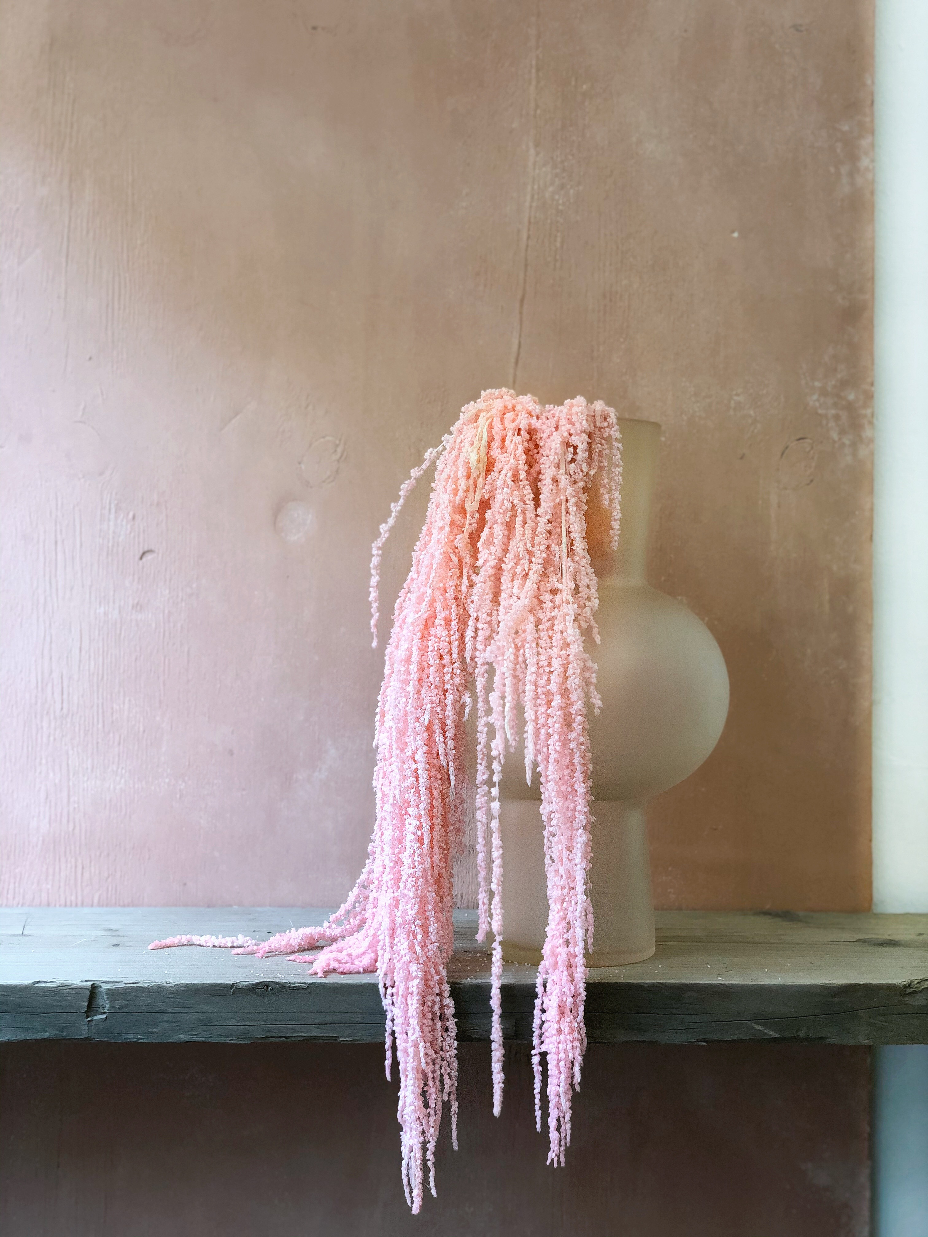 Baby pink Amaranthus