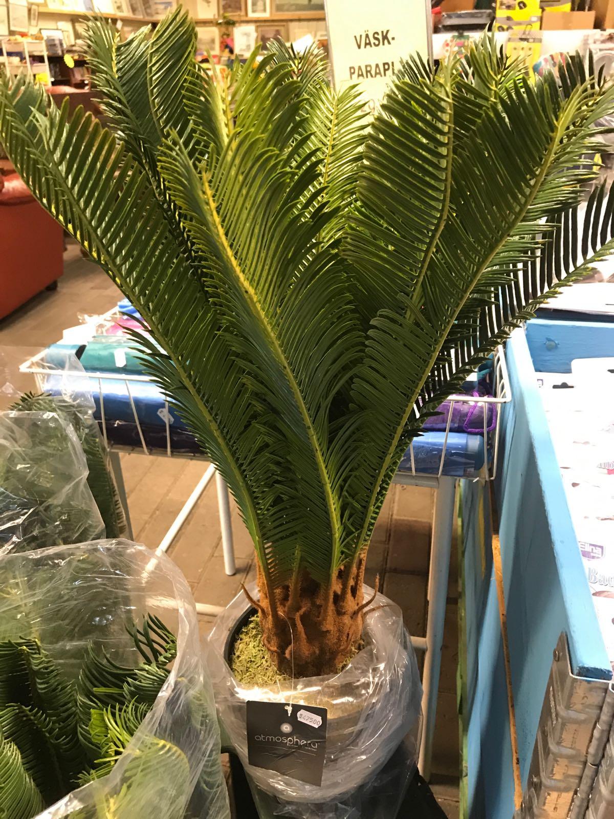 Ananaspalm 72 cm med korg