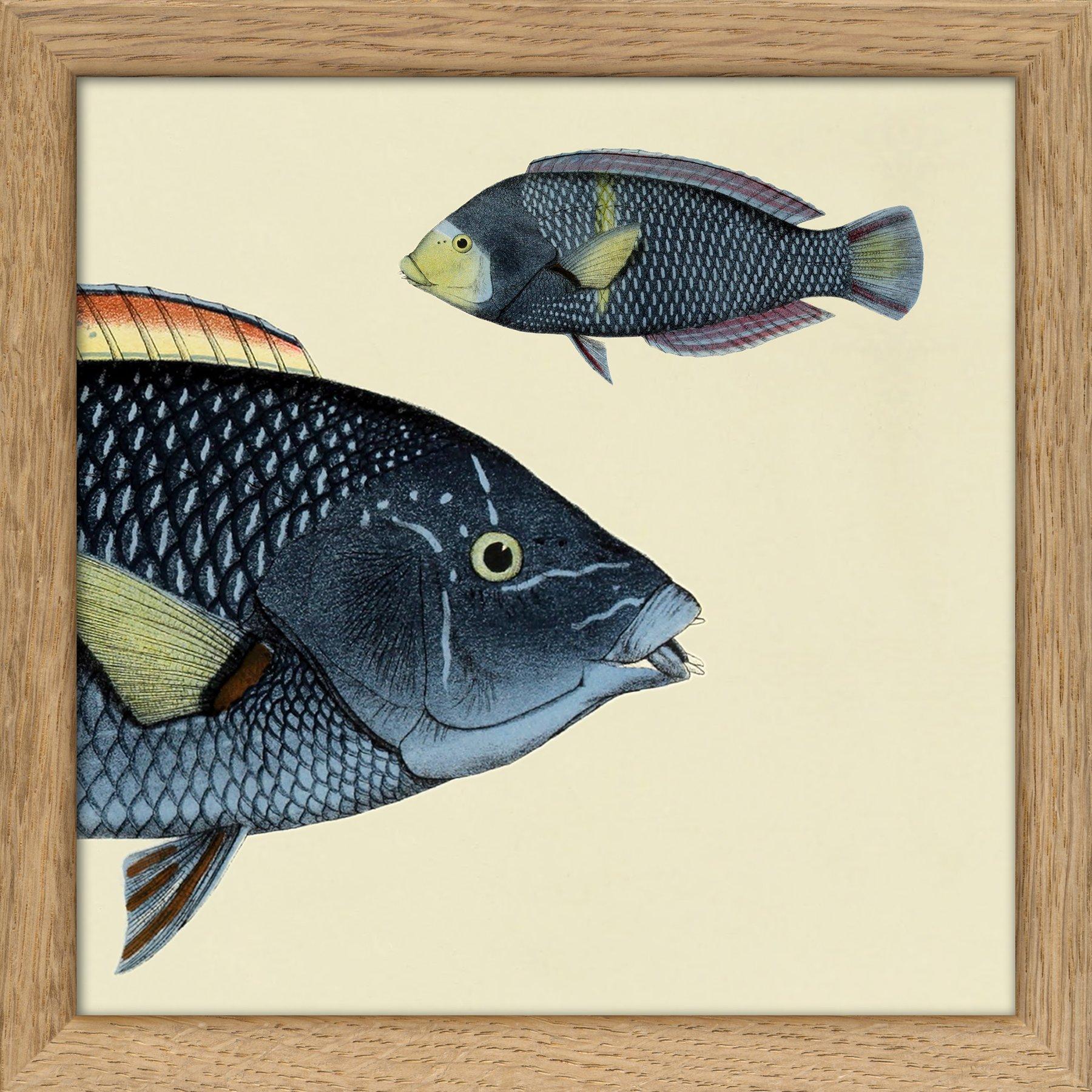 Fish Split Print x2