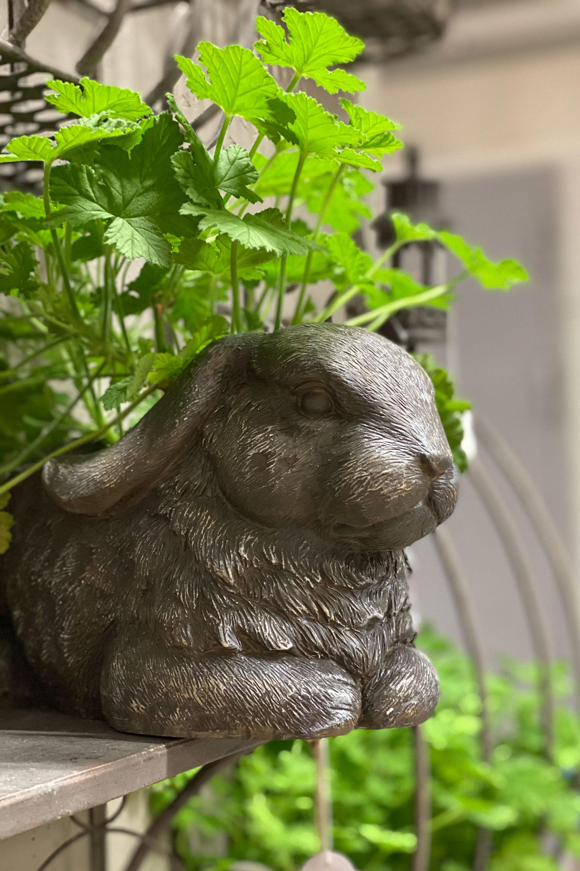 Kruka kanin grå