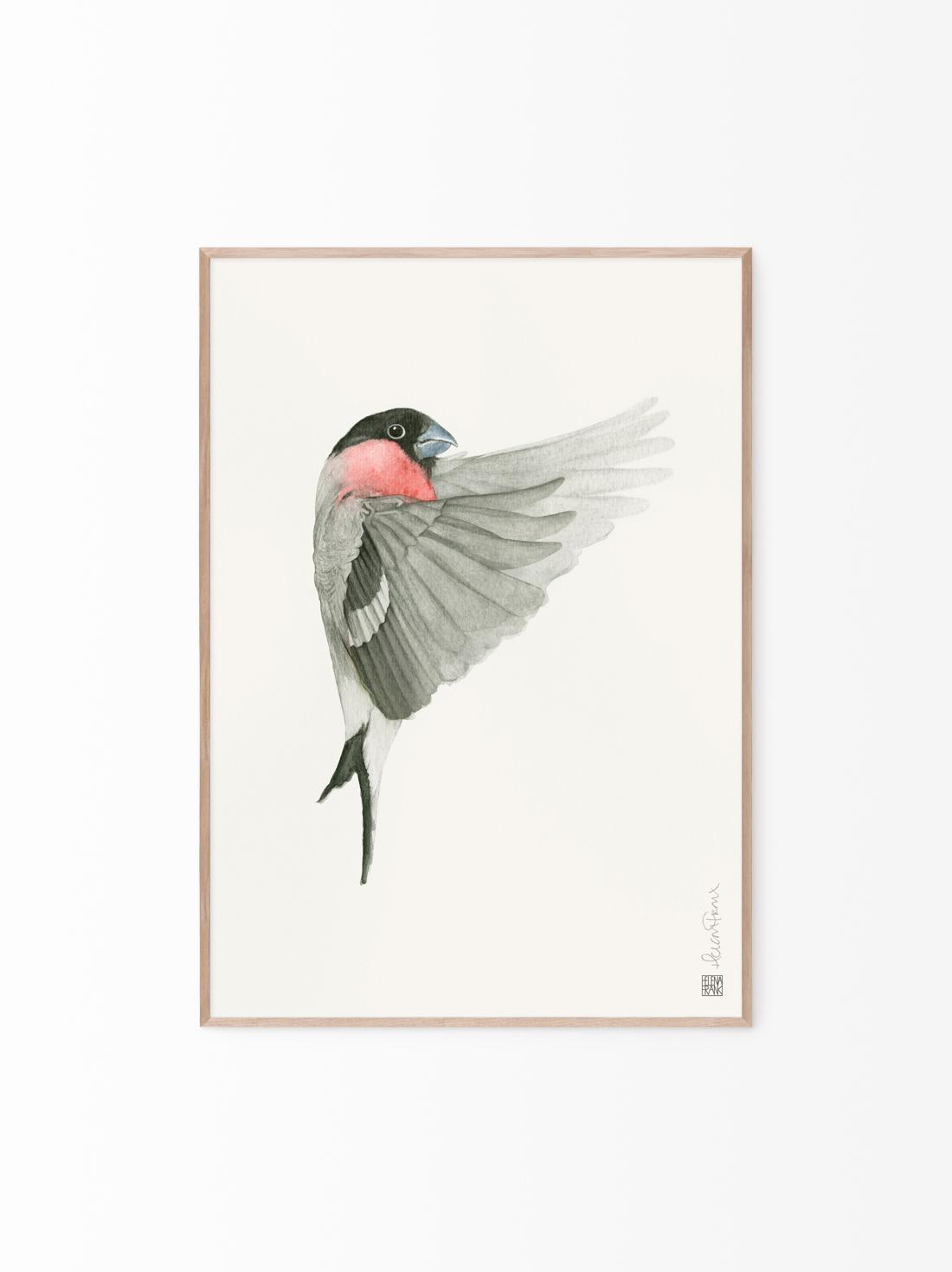 HELENA FRANK - Birdie