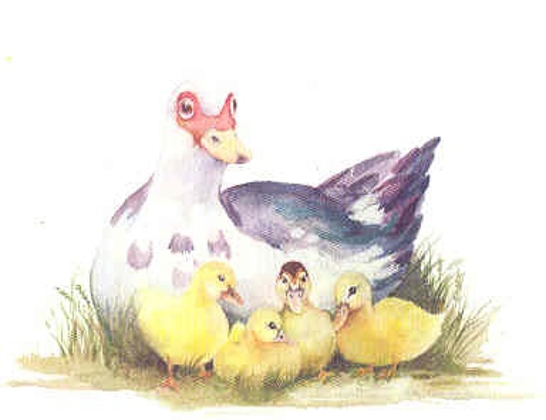 'Muscovy Duck & Ducklings' Furzedown Gallery Mini Card
