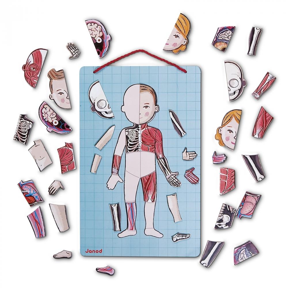 Janod - Magnetspiel Körper