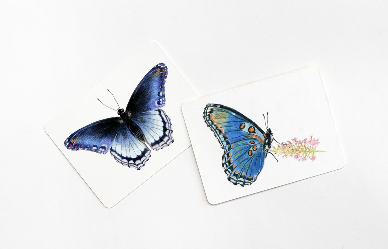Schmetterlinge und ihre Flügel Memo Spiel