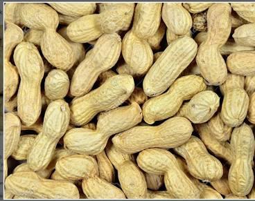 Monkey Nuts 1kg