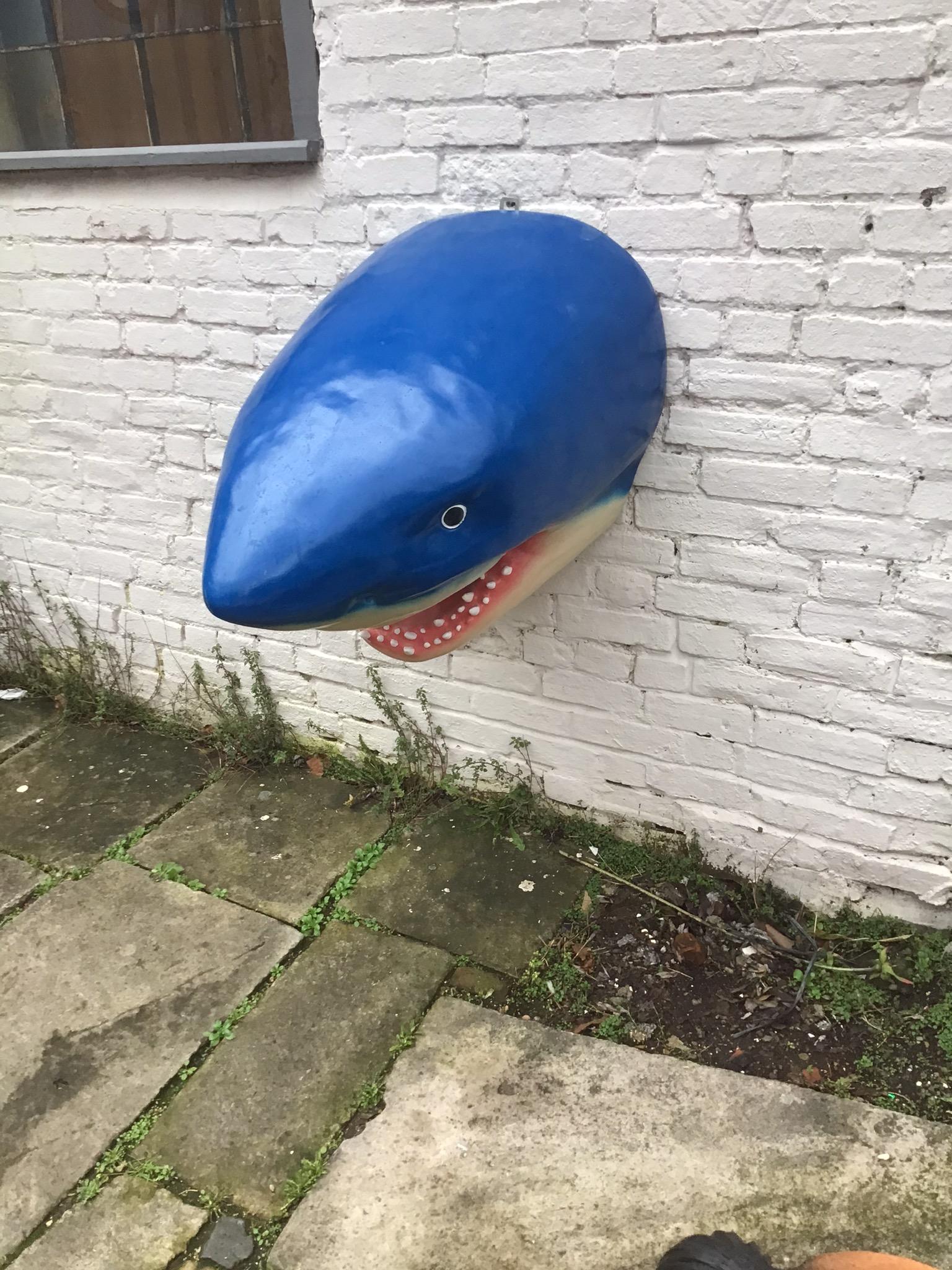 Sharks head