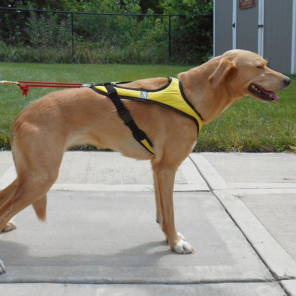 HDA Tough skin harness ULTRA